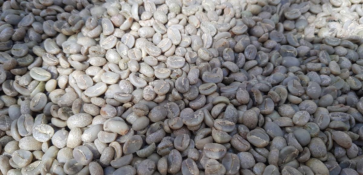 Hạt cà phê Arabica sau khi tách vỏ ( full washed )